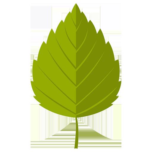 Birkifræ